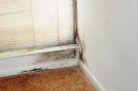 mould in home